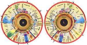 iridology iris chart